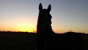 onze visie op paardenhouden